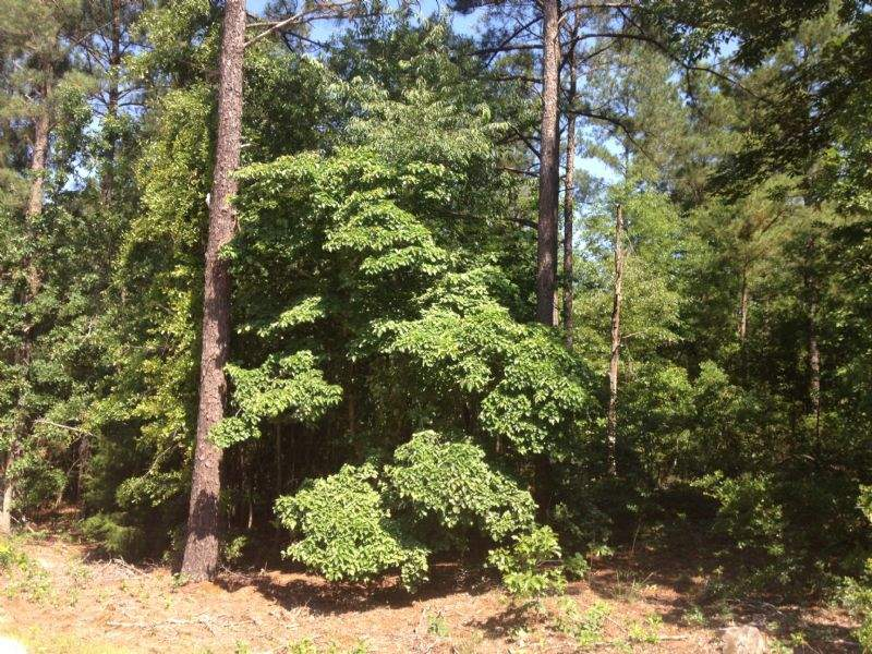 Secluded Homesite in Gilbert, SC Image