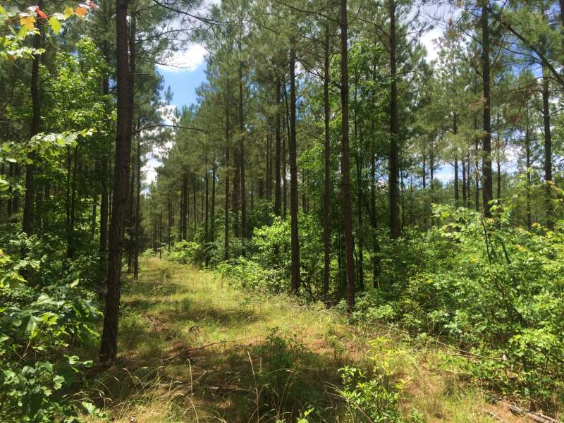 Timberland Investment in Edgefield County, SC Image