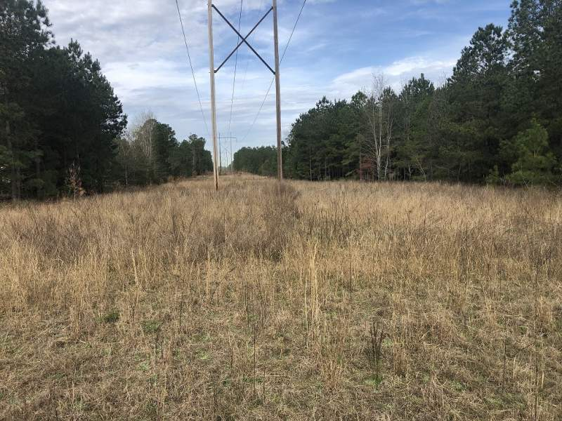 11.9 Acres-$19,900.00 Sumter County Image