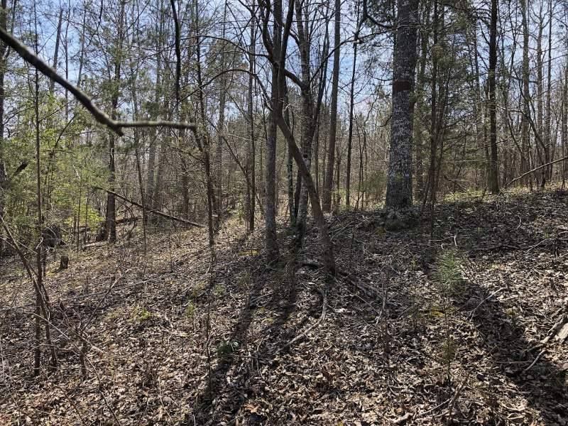 Redcrest Hill, Kershaw, Lancaster County, SC-5 Acres-$49,750.00 Image