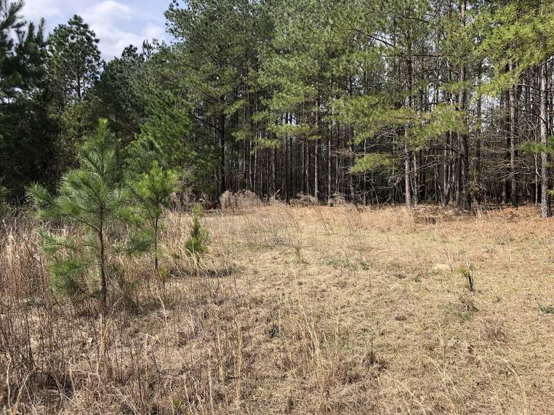 Browntown Rd, Bishopville, Lee County, SC-45 Acres+/-(Lot 5 and outparcel)-$137,097.00 Image