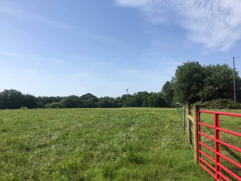 170+/- acre Cattle Farm w/ 4 bedroom house Image
