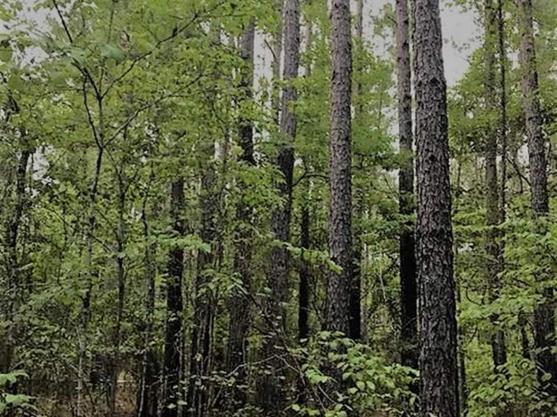 Private Timber Tract in Chesterfield County, SC Image